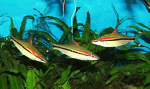 Planted Aquarium 2